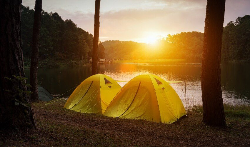 Two yellow camping tents under a pine forest.