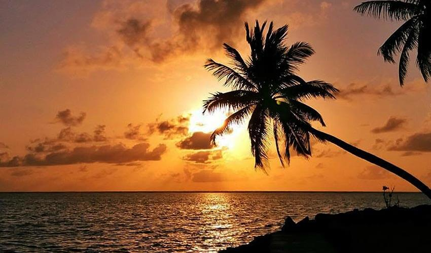 Scenic view of sea and palm tree against sky during sunset