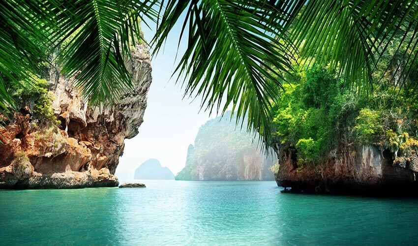 Turquoise coloured sea and palm tree leaves in Koh Phi Phi, Thailand