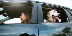A woman drives while a dog watches from the window