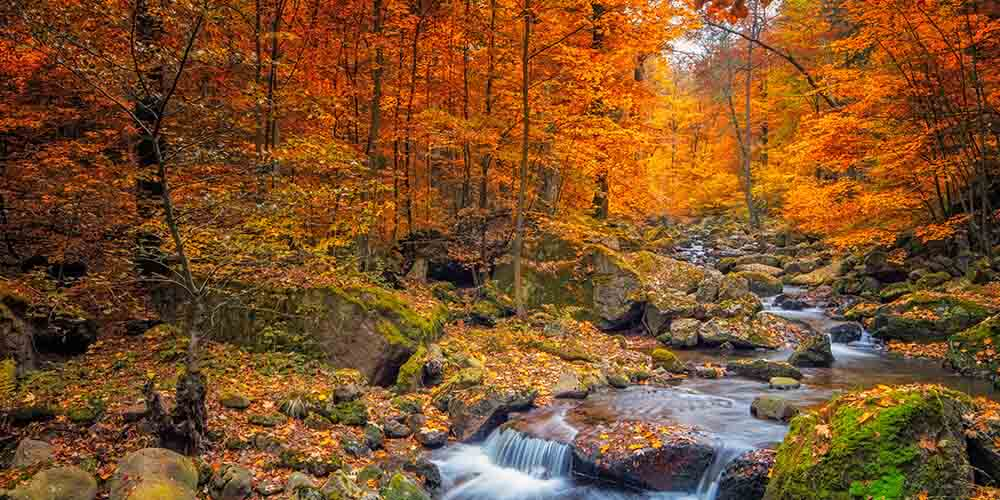 5 of the Best Places to See Fall Foliage in and Around the GTA - CAA South Central Ontario