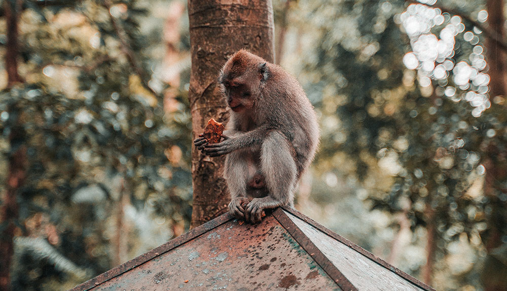 Monkey Forest in Bali, Indonesia