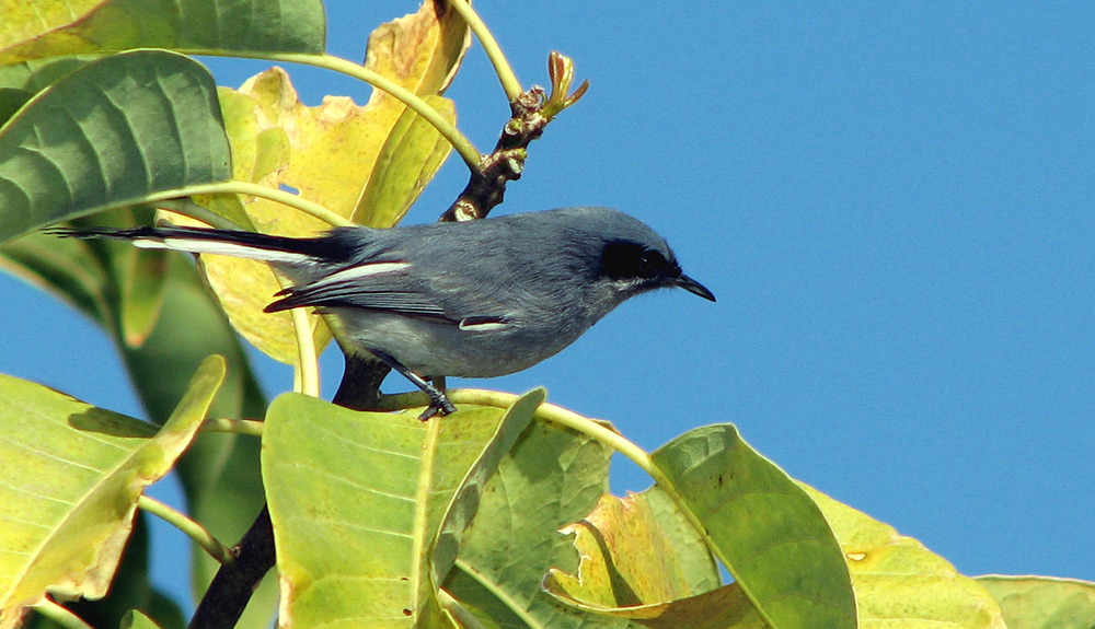 A black bird sits atop green foliage in Buenos Aires