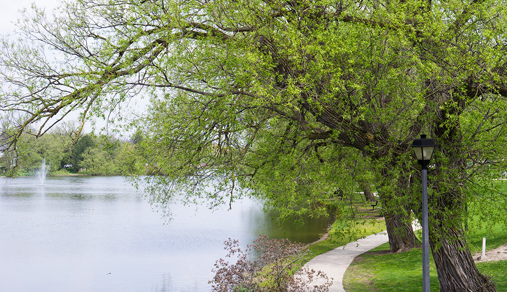 Trees in bloom along the Avon River in Stratford Ontario