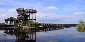 A gorgeous clear spring sky is seen at a long dock that comes to a three-story view point in marshy water area