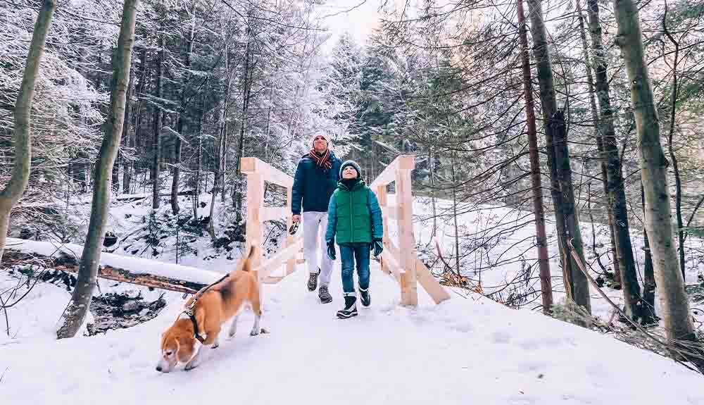 A father and child walk their dog on a path in the woods on a snowy day
