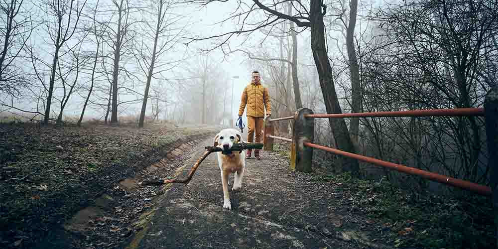 A man walks his dog on a path in the woods