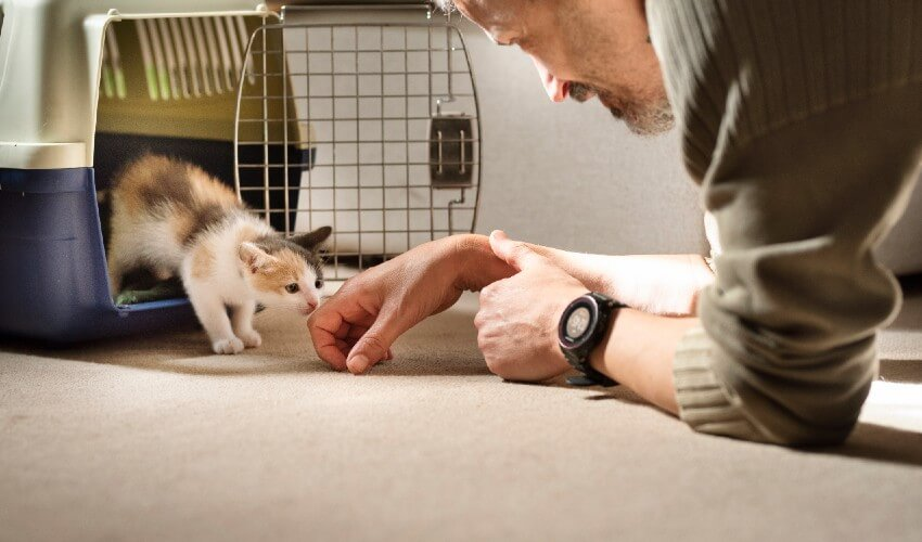 Kitten in pet carrier sniffing male hand.