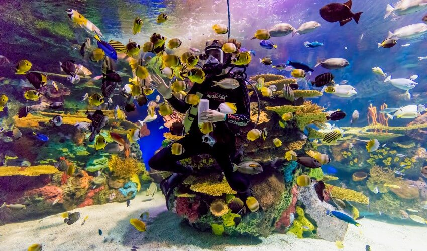 Ripley's Aquarium of Canada diver surrounded by colourful fish.