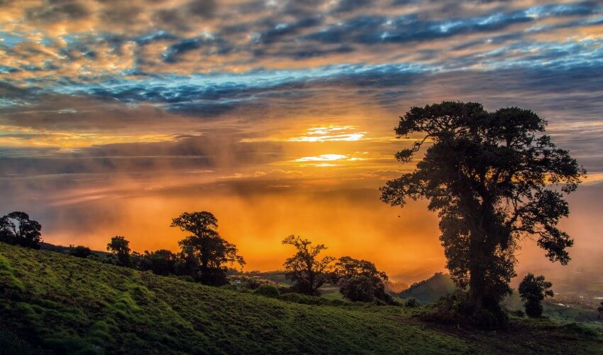 Trees on Costa Rican hillside at sunset.