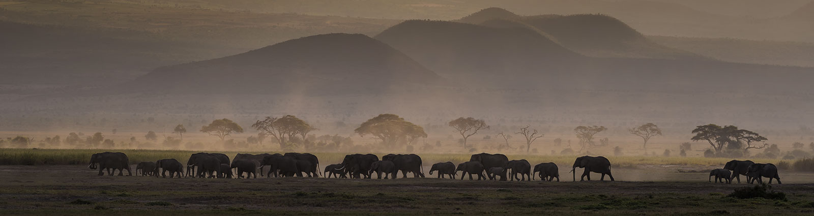 Elephants at sunset, Amboseli National Park, Africa