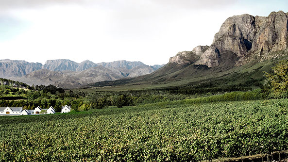 Stellenbosh Wine Routes