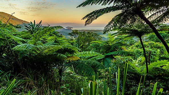 Mount Alexandra Lookout at Daintree rainforest, Queensland