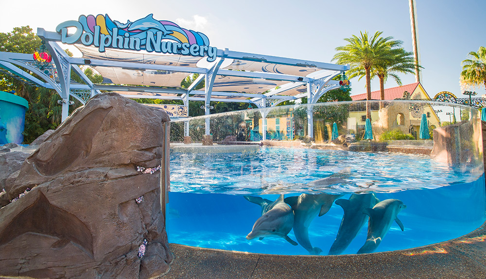 Immerse yourself in virtual reality and the animal kingdom at SeaWorld Orlando