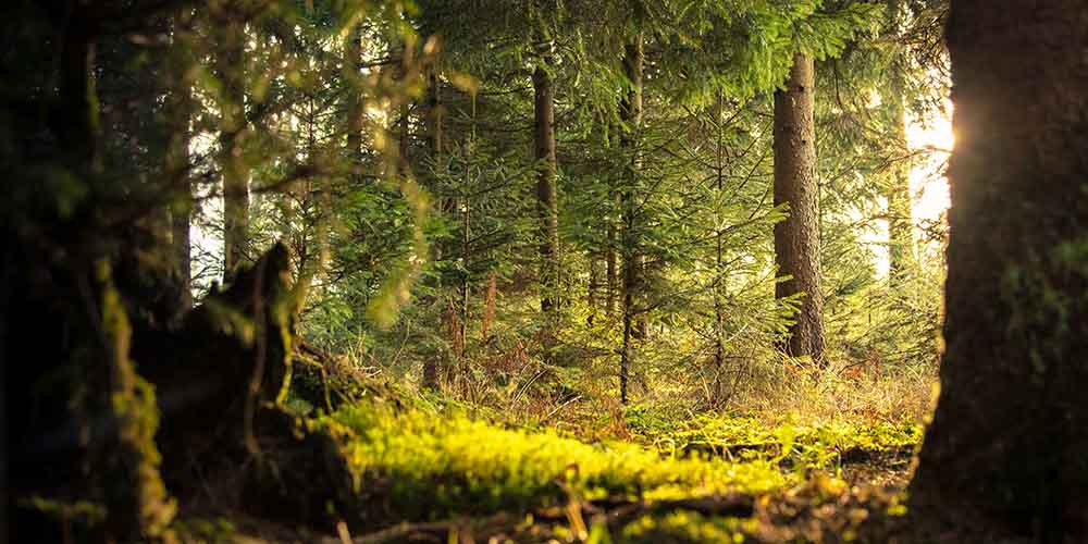 Get Lost in the Woods: Forests With Personality