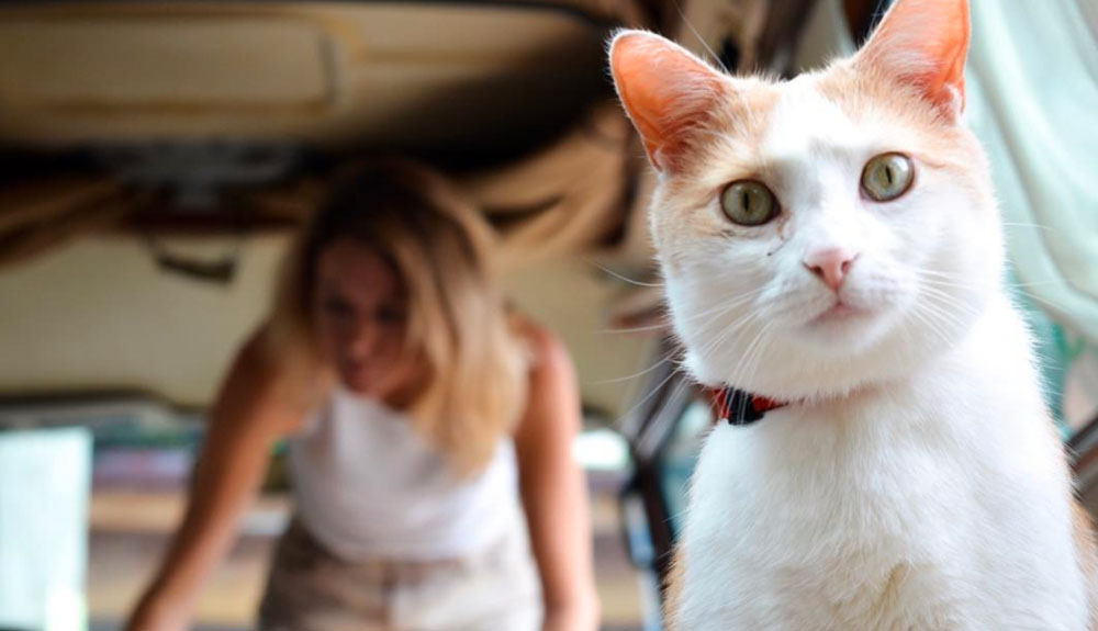How to Train Your Pet for Life on the Road