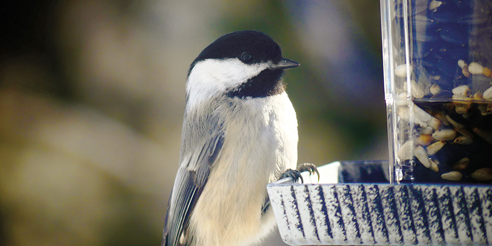 How to Put Up a Bird Feeder This Winter